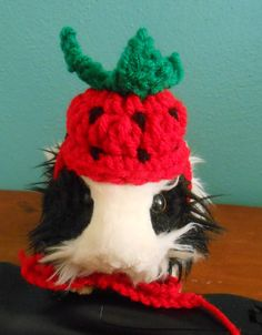 Crocheted Strawberry Hat for Bearded Dragons Guinea by Fancihorse Guinea  Pig Costumes 428cc6e6eac0