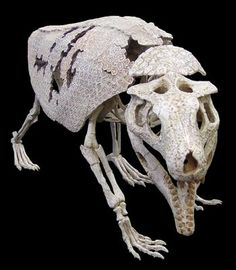 170 best Favorite extinct Animals  images on Pinterest   Dinosaurs     Armadillosuchus  a crocodyliform which lived in the late cretaceous period   Armadillosuchus and the family