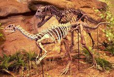Ceratosaurus attaquant un Dryosaurus //Ceratosaurus attaquant un Dryosaurus. By Kordite