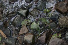 El Montseny està considerat Reserva de la Biosfera per la UNESCO, s'hi poden trobar més espècies vegetals que a tota Anglaterra junta, des d'espècies d'Àustria a d'altres del Marroc. Un exemple de la seva singularitat és el Tritó del Montseny, la tercera espècia més amenaçada al món.
