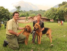 Congohounds in Virunga Gallery African Jungle, Picture Boards, A Beast, Bloodhound, Natural Resources, Wild Animals, Closer, Police, National Parks