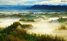 Taiwan bamboo - pretty~