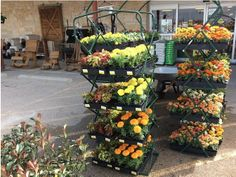UST IN - beautiful flowers, herbs, trees, vegetables and more! #GardenParadise