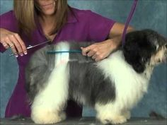 ▶ How to Groom: Havanese Jodi Murphy Instructional Series DVD - YouTube