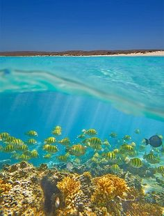 Travel Australia: Ningaloo Reef is Australia's largest and most accessible fringing reef. Ningaloo Reef extends 10 nautical miles seaward and encompasses over square kilometres of ocean. Oh The Places You'll Go, Places To Travel, Places To Visit, Travel Destinations, Western Australia, Australia Travel, Coast Australia, Queensland Australia, Visit Australia