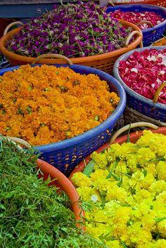 Mercado de Flores, generalmente la venta de este tipo de Flores se da para noviembre que es cuando realizamos nuestro Hanal Pixan o comida de muertos