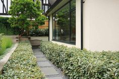 Beautiful town garden in Putney, design includes black granite stone paving and hard wood gates Granite Stone, Black Granite, Modern Garden Design, Landscape Design, Small City Garden, Paving Stones, Beautiful Gardens, Sidewalk, London