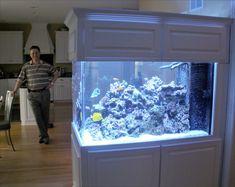 Room Divider Aquarium and Owner - Blue Planet Aquarium