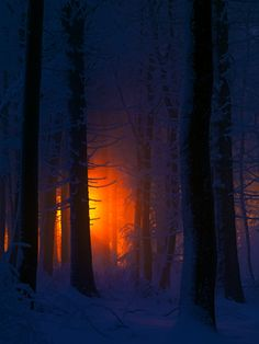 forest winter #WOW
