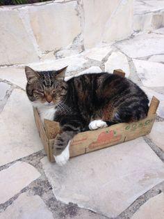 Une princesse dans un carton, cherchez l'erreur !!!