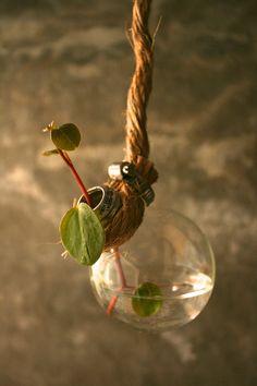 Shabby Chic Decor Hanging Lightbulb Vase Glass Vase Cottage Style - Rustic Rope Design via Etsy Shabby Chic Signs, Shabby Chic Homes, Old Lights, Flea Market Style, Cottage Style, Light Bulb, Inspiration, Holiday Decor, Glass Vase