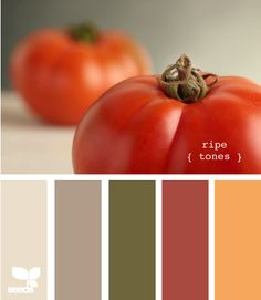 Possibly the wall color and accents for the kitchen. The wall would be the tomato red.