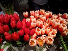 Renegade tulips