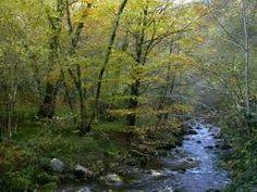 Encontramos el bosque caducifolio en torno a los 40 y los 55 de latitud. El clima tipico tiene un regimen termico moderado, precipitaciones abundantes y ...