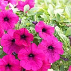 10 καλοκαιρινά λουλούδια που κλέβουν την παράσταση! Home And Garden, Gardening, Plants, House, Home, Garten, Haus, Lawn And Garden, Planters