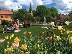 ROYAL GRASS® PUBLIC PARK STOCKHOLM - SWEDEN