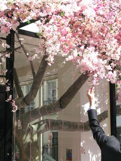 Cherry blossom tree installation, Jo Malone, London