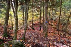 Image result for forêt ontario
