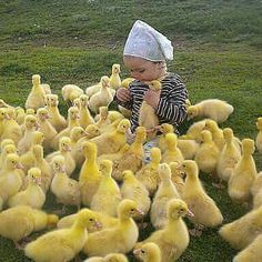 One cute little girl with LOTS of ducklings