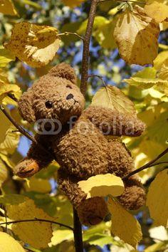 Unser KramBam auf einem Baum im Herbst - wie immer will er hoch hinaus.