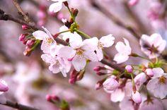 2015/4/2 三重県四日市市川島町 PENTAX K30