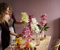 #cymbidium   orchids-info.com