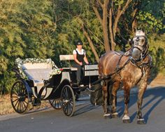Angeli Carriages - Our Victorian style Carriage, Percheron Elysian, and coach woman Fiona.