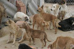 El Cabildo de Tenerife revoca la autorización para disparar a perros salvajes - http://gd.is/myZLIk