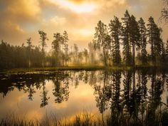 Autumn Morning by Jan Bedoire  / 500px