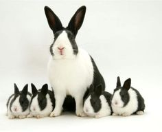 Bunnies!!! #Dutch #Cute