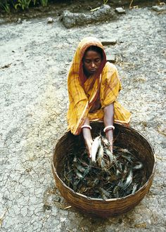 Rural woman farmer, harvesting fish from the pond, Bangladesh (2002). Photo: Ebbe Schioler
