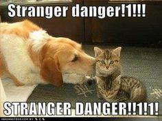 funny-dog-pictures-stranger-danger.jpg picture by TaurorX - Photobucket