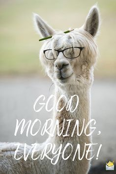 Looking for for images for good morning motivation?Check this out for perfect good morning motivation inspiration. These entertaining images will make you enjoy. Good Morning Funny Pictures, Cute Good Morning Quotes, Good Morning Cards, Good Morning Sunshine, Good Morning Picture, Good Morning Good Night, Good Morning Wishes, Morning Pics, Good Morning Everyone