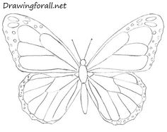 butterfly drawing More