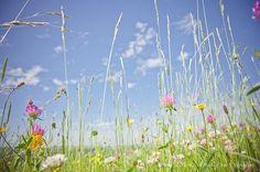 Photos de prairies naturelles dans le cantal et le puy de dome. Photographe agricole : Eve Hilaire