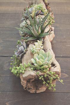 Succulent driftwood arrangement by howladventures.com