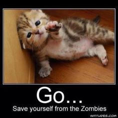 Not even cute kittens are safe from zombies! Cute Kittens, Cats And Kittens, Silly Cats, I Love Cats, Crazy Cats, Adorable Cute Animals, Baby Animals, Funny Animals, Animal Funnies
