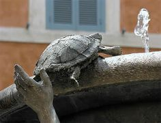 Roma, ghetto, fontana della tartaruga