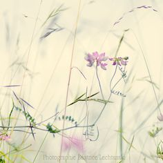 Vetch and grasses ... Wild flower. Pastel. Fine art photography print. 8x8 inches (20x20 cm) via Etsy