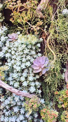 Descanso Garden // La Cañada Flintridge, CA Canada, Garden, Plants, Garten, Gardening, Plant, Outdoor, Gardens, Yard
