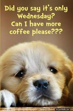 Did you Say Its Only Wednesday Can I Have More Coffee?                                                                                                                                                                                 More                                                                                                                                                                                 More