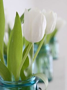 tulips + mason jars = spring at my parents :)