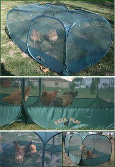 Portable Chicken PeckandPlay portable coop - what a nifty idea! Backyard Farming, Chickens Backyard, Chicken Enclosure, Mcmurray Hatchery, Chicken Swing, Chicken Coup, 99 Chicken, Designated Area, Raising Chickens