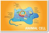 Animal Cell Biology NEW CLASSROOM BIOLOGY SCIENCE POSTER
