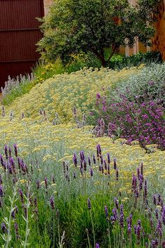 Just as you would use colors opposite each other on the color wheel with interiors, planting outdoors using this same principle creates the same strong visual. nepeta, salvia, yarrow and more...in purples, lavenders and yellow, green