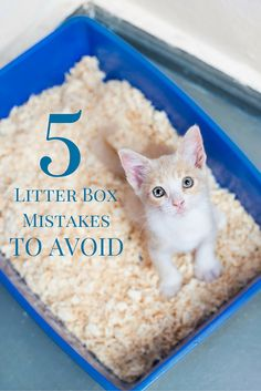 If you want to keep your cat using the litter box regularly caring for your & Litter Box Smell Solutions- Follow these 10 simple steps to keep ... Aboutintivar.Com
