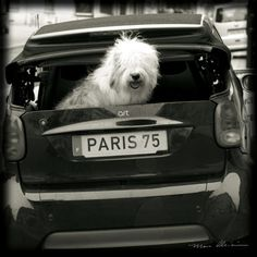Paris Dog I Art Print