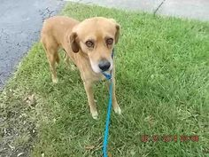 LOBO has 1 day Left to Live! Terrier Mix Breeds, Dog Status, Pet Adoption, Animal Adoption, Homeless Dogs, Dog Id, Losing A Pet, Shelter Dogs, All Dogs
