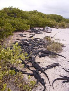 Galapagos - Santa Cruz; Routard05