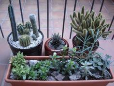 Todo sobre el cactus
